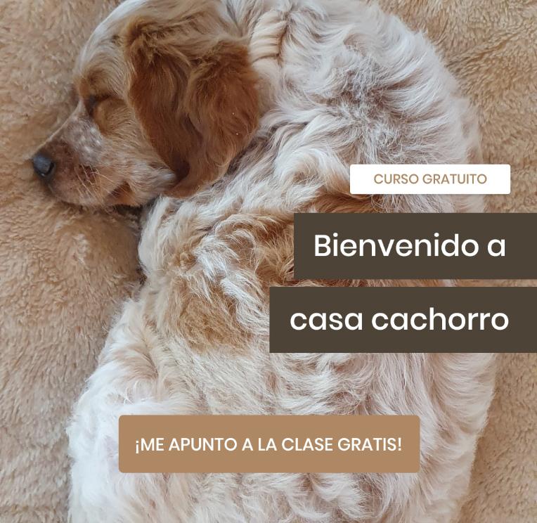 Pat Educadora Canina